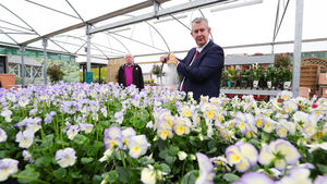 Stormont minister calls for action on Brexit plant and soil bans