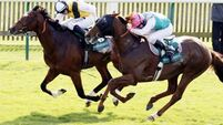 Command in hat for York Stakes