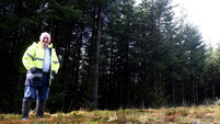 Forest industry tells government how sector can be saved