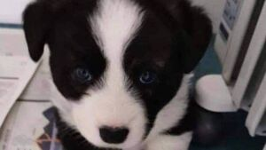 Litter of puppies stolen from woman's boarding kennels in Kilkenny