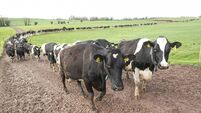 Zero grazing under scrutiny in nitrates review