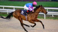 Fairyhouse & Dundalk tips: Messidor can take step up to listed level in her stride