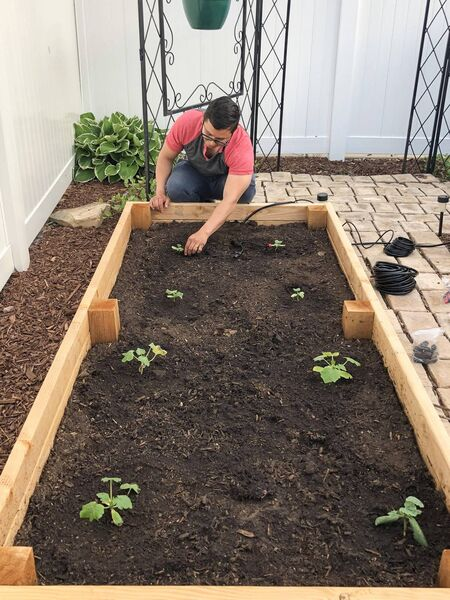 A gardener tends to a raised bed.