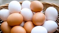 Various Chicken eggs on heap