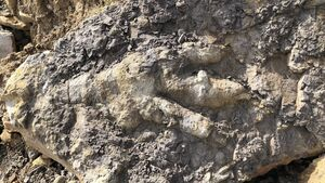 'Jurassic giant' dinosaur footprint found