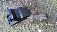 Rat infestation leaves residents of Cork City estate frustrated and worried