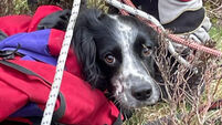 Puppy rescued after falling 300ft down waterfall
