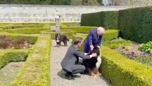 Michael D Higgins introduces Ryan Tubridy to Bród's new brother, Misneach
