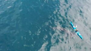 Watch: Incredible footage of basking sharks swimming beside kayak in West Cork this morning