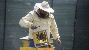 Milan gets buzzier with bees in designer hives
