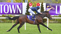 Leopardstown report: Bolshoi Ballet dances to Derby favouritism