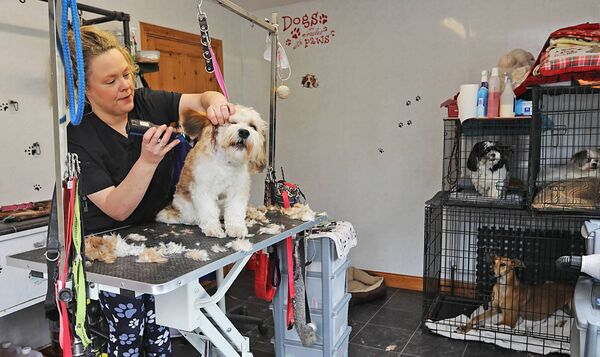 Pawfection: Joyce McDonald of Laurelhill Dog Grooming, Redhills, Cavan, works on her client Floki on Monday morning as Kacey, Dougal and Teela wait for their turn. Humans and dogs will be rocking new styles following the lifting of restrictions. Picture: Lorraine Teevan