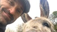 Patrick Dempsey makes a new friend in Wicklow