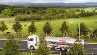 Dairygold adds 0.5c to milk price