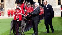 President returns Domhnall the Irish Wolfhound's coat