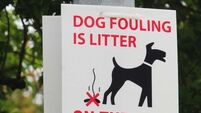 Cork Councillors want to name and shame those prosecuted for not clearing up dog fouling