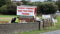 Beef crisis latest:  'Self harm' being inflicted on industry; Concern for non-EU workers laid off