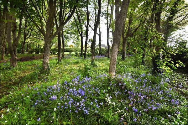 Terdapat kawasan hutan asli, dan penanaman yang lebih formal di kawasan seluas 2.5 ekar di Atherstone