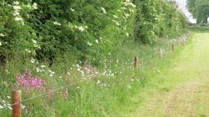 The impact of field margins on nature and biodiversity