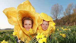 It's Daffodil Day today. Target: €3.4m