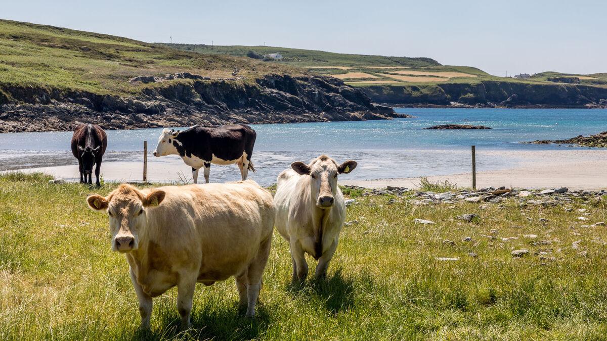 Irish Farming - cover