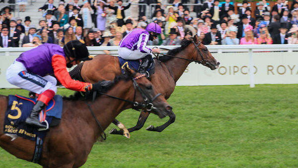 2570075 1 articlelarge Point 20Lonsdale 20Royal 20Ascot 203.