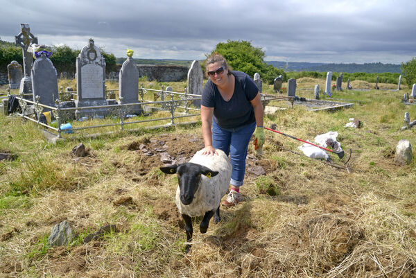 One hoof in the graze: Graveyard committee member Cllr Audrey Buckley with her adopted sheep, Molly, at St Matthew's graveyard at Templebreedy Church. Picture: Denis Boyle