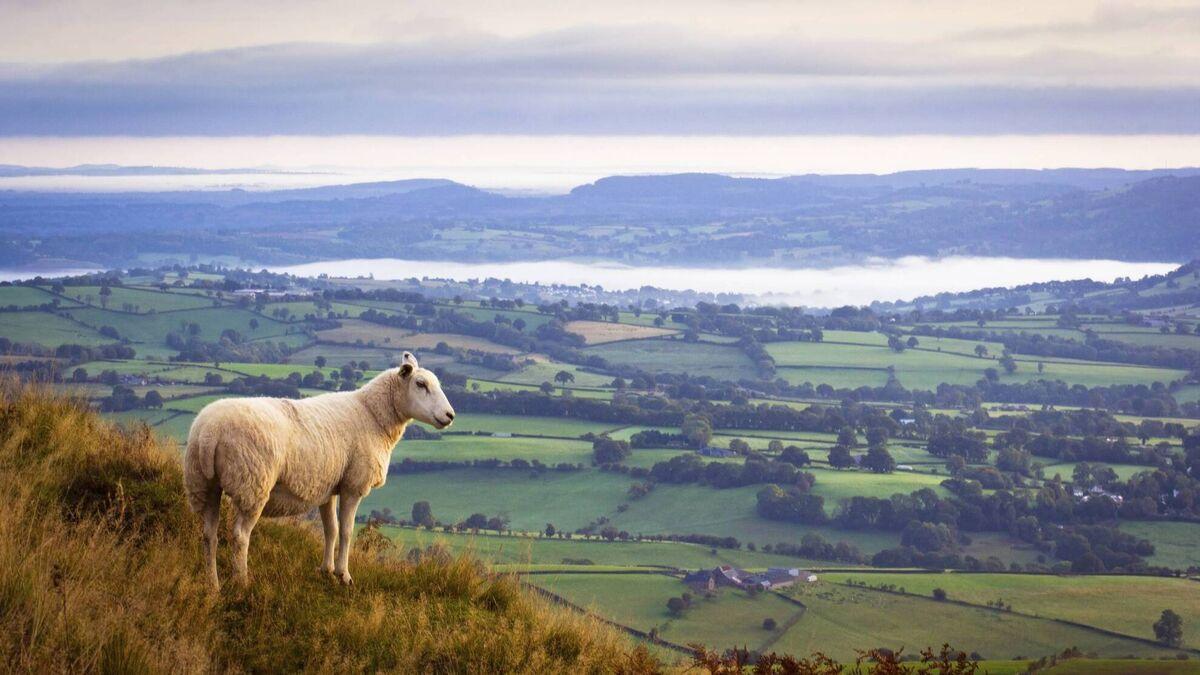 Farm land values: Positive picture on the landscape
