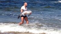 The 'Cathal  Pendred saves a dolphin' story did not have a happy ending