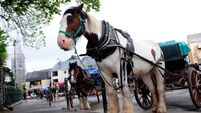 Horses' hooves wearing down road surfaces in Killarney