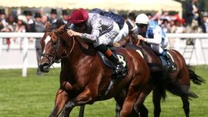 'Superhuman' Toronado delivers at Ascot