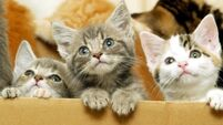 'Mortified' after dumping three kittens in charity clothes bin