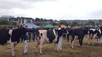 Clonakilty Agricultural Show brings a little country to town