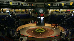 Sale of €1.4m colt lifts Goffs' results