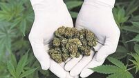 Experts to provide clarity on medicinal cannabis