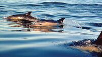 Autopsies to be carried out on washed-up dolphins