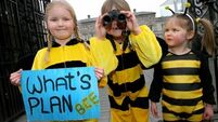 Leinster House was a hive of activity amid bee protest