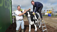 Ploughing Championships: Europe's largest pop-up town