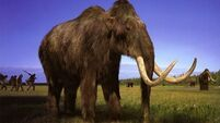 Mammoth tracks give an insight into lives