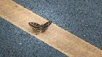 Roadway massacre for billions of insects