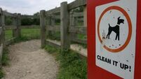 €32k dog fouling campaign 'not a waste of money'