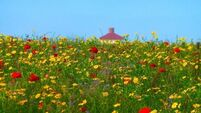 Wildflower meadow is nature at its photographic best