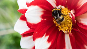 Bees facing threat of extinction