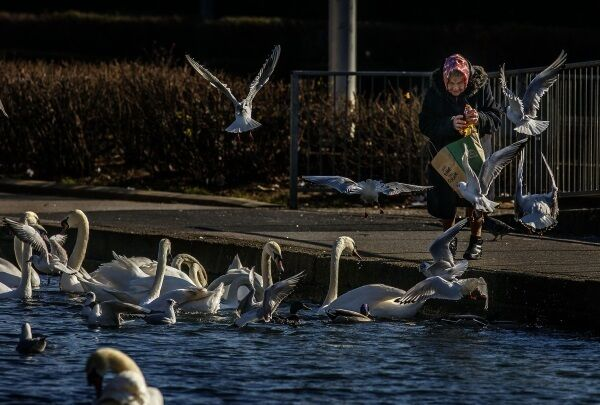 A lady feeding the birds on the Grand Canal in Drimnagh. Pic: Marc O'Sullivan.