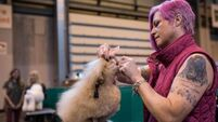 Crufts dog show is dogged by fresh controversy