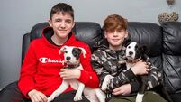 Brave teenagers hailed as heroes after puppy rescue