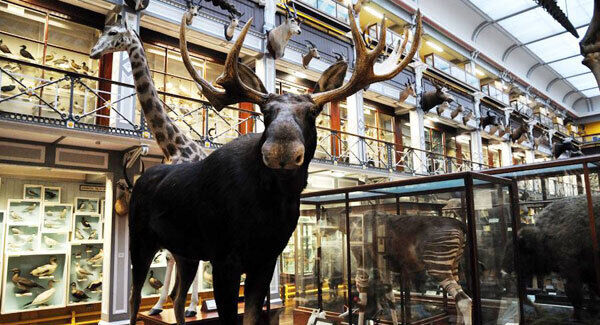 The Natural History Museum, which attracts 317,269 visitors per year, is one of five museums in the top 10 free attractions.