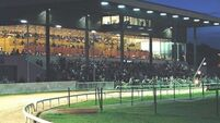 'No tender process' for Harold's Cross greyhound stadium
