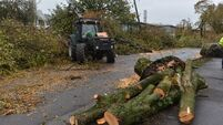 Helping the tree population recover from storm Ophelia