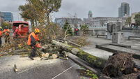 Calls for review of Cork city's tree policy after Ophelia knocks up to 600 trees